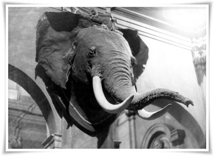 La casa dell'elefante 12