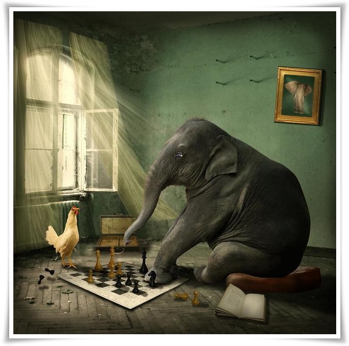 La casa dell'elefante 20