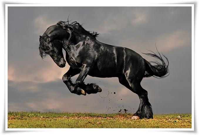 Powerful Horse