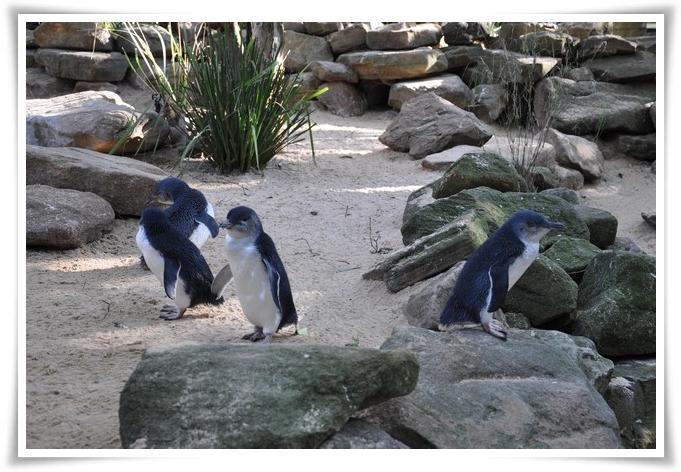 pinguini-560