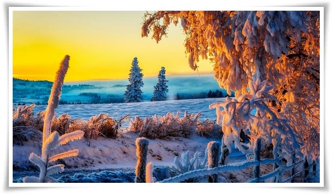 gemma-di-inverno-7
